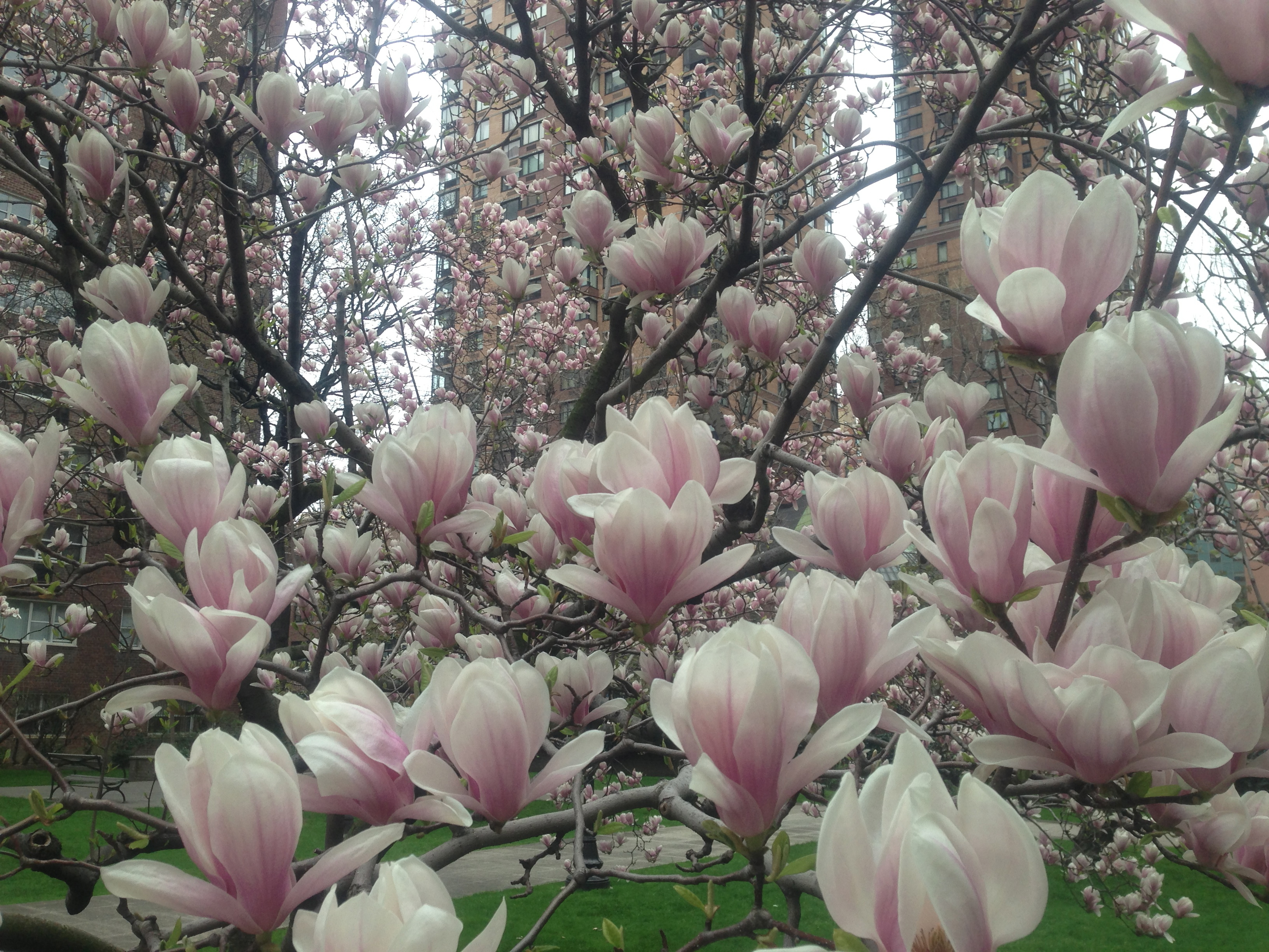 Love Magnolias? I do.. - Me Too Cakes Amy Landini Kathuria